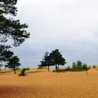 финский залив :: натальябонд бондаренко