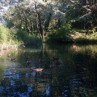 Есть в  тихом парке пруд... :: Николай Дони
