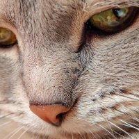 Котик. :: Наташа