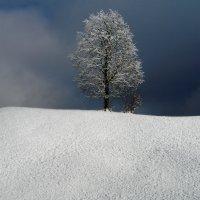 одиночество :: Elena Wymann