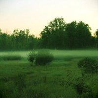 Перед тем как природа засыпает... :: Наташа Шамаева
