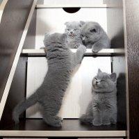 Мы маленькие дети, нам хочется играть... :: Ольга Горковенко