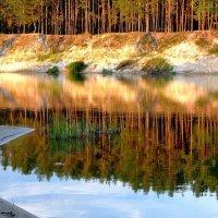 Сосны и река.. :: Юрий Анипов