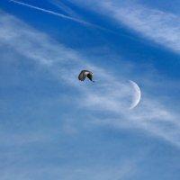 Бледный месяц и гордый орёл.... :: Анатолий Клепешнёв
