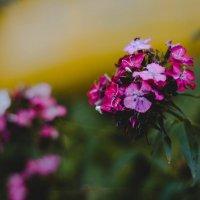 Что может быть красивее природы... :: Анна Кадулина-Новоселова