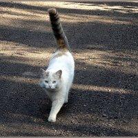 Кошка, которая гуляла сама по себе :: Вера