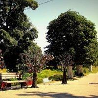 деревья счастья :: Ольга
