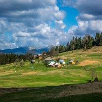 Карпаты,Украина :: Валерий Штеба