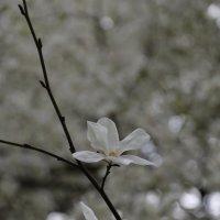Цветочный хоровод-489. :: Руслан Грицунь