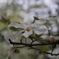 Цветочный хоровод-486. :: Руслан Грицунь