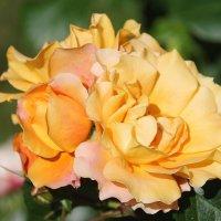 Еще цвету, еще надеюсь.... :: Tatiana Markova