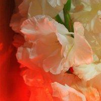 В мире цветов... :: Галина Стрельченя