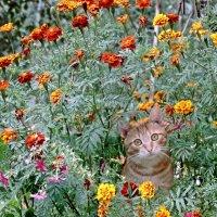 Кот в цветах :: ivolga