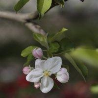 Цветочный хоровод-493. :: Руслан Грицунь