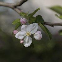 Цветочный хоровод-491. :: Руслан Грицунь