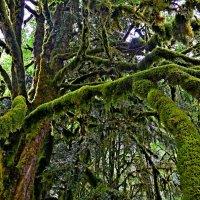 заколдованный лес :: Елена Третьякова