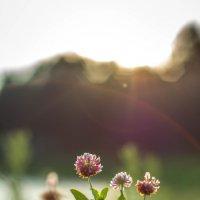 Сколько всего в мире красивого... :: Анна Кадулина-Новоселова
