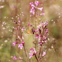 бабочка :: Александра Сапоровская-Костюшко