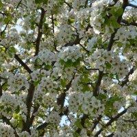 Весна в цвету) :: Наталья Мельникова