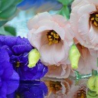 Розы любви :: galina tihonova