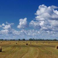 Сжатое поле :: Виктор Четошников