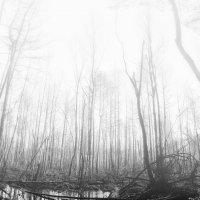 Лес болотный 2 :: Genych