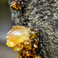 Золото природы :: Саша Лист