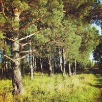 Лес :: Ксения Петрова