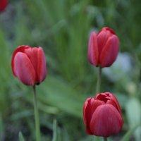 Цветочный хоровод-500. :: Руслан Грицунь
