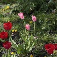 Цветочный хоровод-498. :: Руслан Грицунь