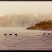 туман :: Андрей Иванов