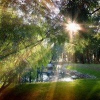 Лопухинский сад :: ВЛАДИМИР