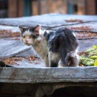 Уличный кот :: Кирилл Каменков