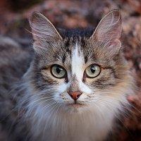 Кошка, просто кошка :: Артур Миханев