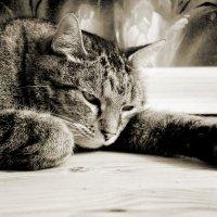 Про кота :: Татьяна Петранова