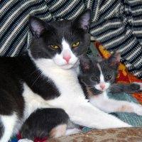 Морской кот и юнга :: Константин Николаенко