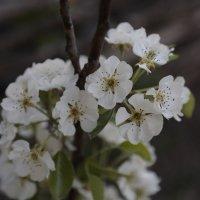Цветочный хоровод-504. :: Руслан Грицунь