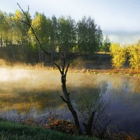 Майское утро :: sergej-smv