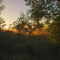 Утро сентября :: sergej-smv