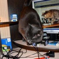 Проблема  у  нас  с  компьютером - один  на  двоих.....(( :: Валерия  Полещикова