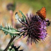 Butterfly :: Gulrukh Zubaydullaeva