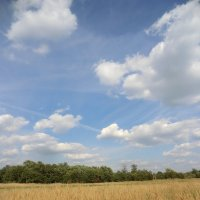 Поле, облака, август... :: Владимир Павлов