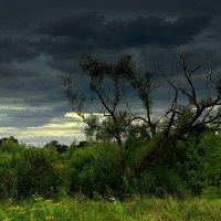 Дерево :: Вячеслав Минаев