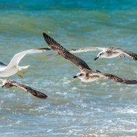 Чайки :: Бруно Преэс