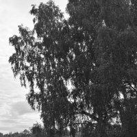 Летний день :: Маро Арушанян