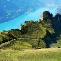 альпийский пейзаж с коровами :: Elena Wymann