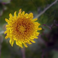 Совсем простой цветок... :: Ирина Румянцева