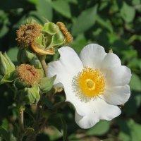 Цветок :: Вера Щукина