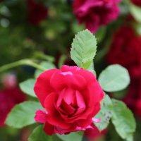 Цветочный хоровод-513. :: Руслан Грицунь