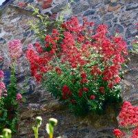 Заросла стена цветами :: Natalia Harries